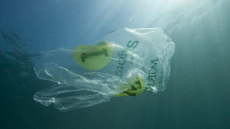 03 Jun 2010 --- Plastic bag floating in the sea, resembling a jellyfish swimming Dangerous to sea turtles --- Image by © Sue Daly/Nature Picture Library/Corbis